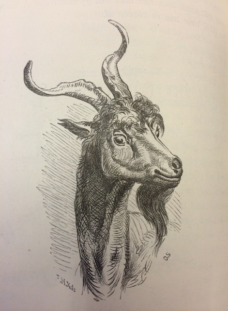 Ilustración de cabra