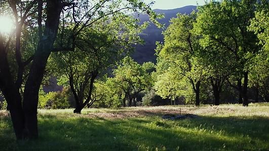 picture Alpujarra almond grove.png