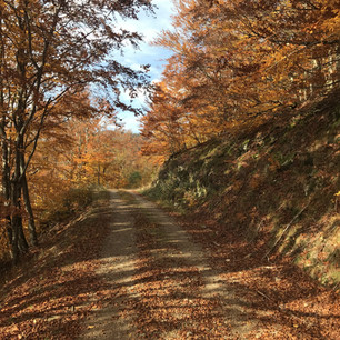 Herbst Wald.jpg