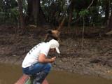 monkey Peru Amazon Wild