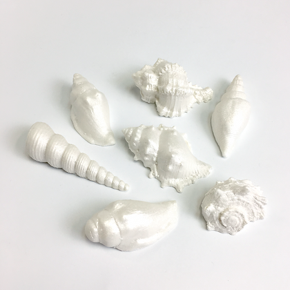 Sugar seashell pack - medium