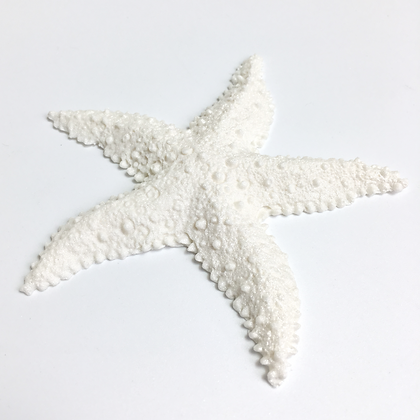 Sugar pointy starfish