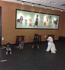 Chaz at obedience class 5-14.jpg