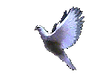 dove_edited.png