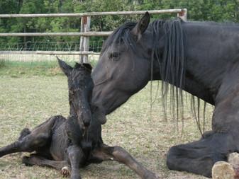 Geburt Janus