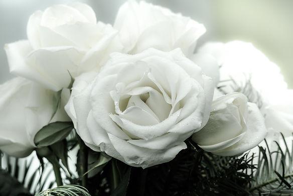 rosesfinalfade.jpg