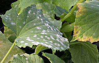 fungicides.jpg