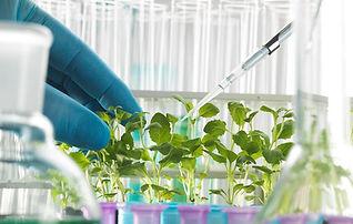 13-plant-biotechnology-tek-image.jpg