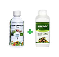 Vanguard+Biofield