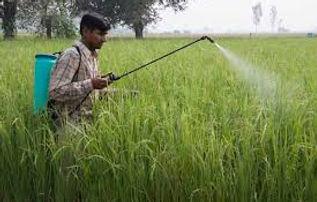 Bio pesticides1.jpg