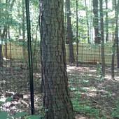 Deer Fence (4).jpg