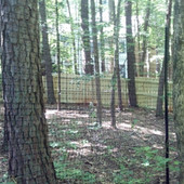 Deer Fence (2).jpg