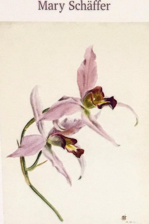 Mary Schaffer Botanicals - 8 blank notecards
