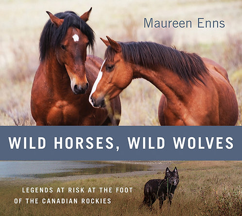 Wild Horses, Wild Wolves: Legends at Risk at the Foot of the Canadian Rockies
