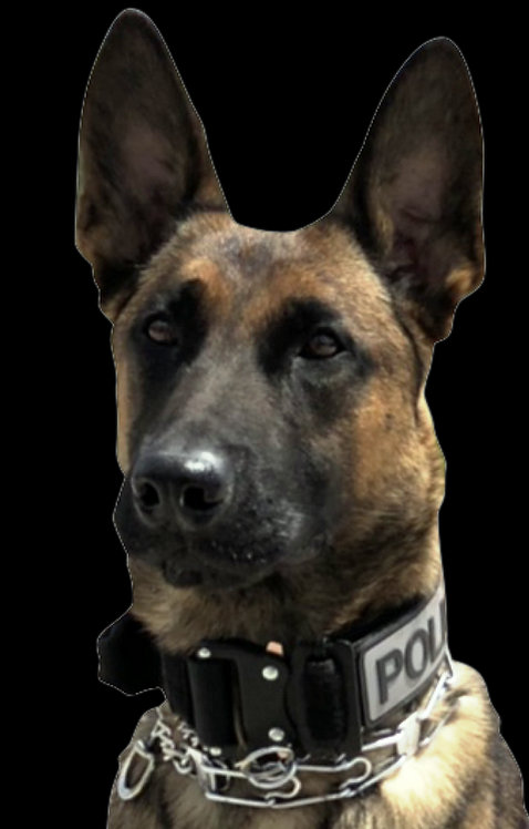 K9 Decal for Squad