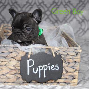 Puppies of Phoebe & Blade