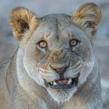 Roar-of-Namibia-14-day-Camping-Tour.jpg