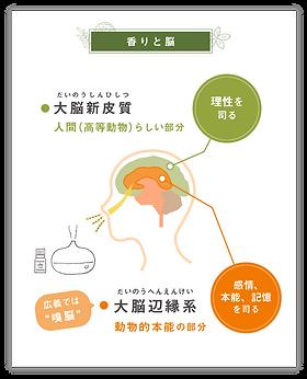 香りと脳_SP.png