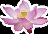 a33_lotus.png