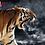 Thumbnail: Tiger Spirit Amulet @ LP Pern