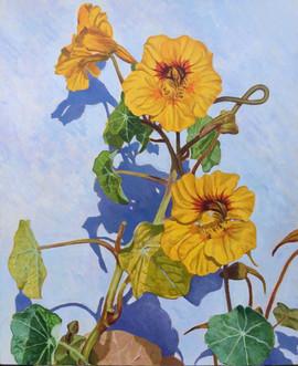 "Winner of the August Competition ""Garden Delights"" Ali McQueen"