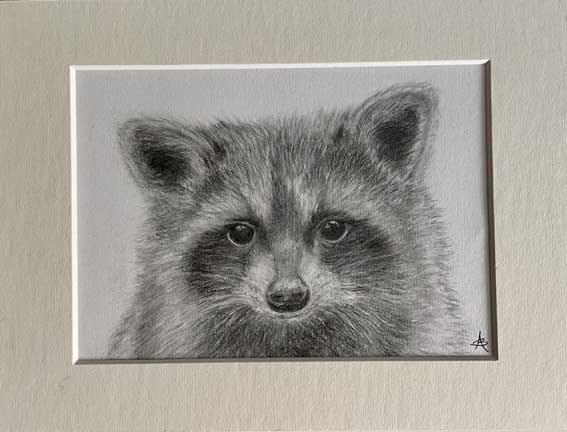 """Raccoon""  pencel  24 x 18cm  £75"
