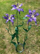 Giant Orienpet Lily Purple Lady