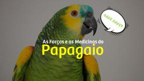 As Forças e as Medicinas do Papagaio