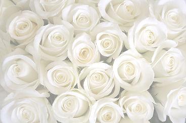 white-rose-horizontal-background.jpg