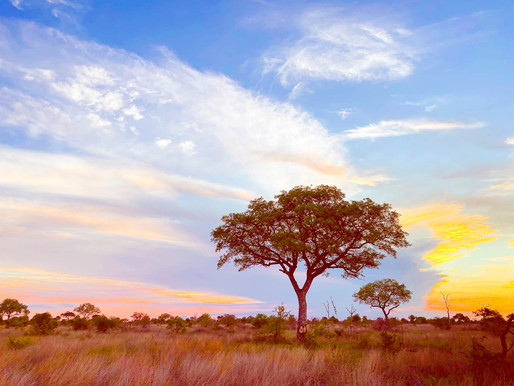 Im südafrikanischen Busch vom Skorpion gestochen - Die fünfte Reise in den Kruger National Park