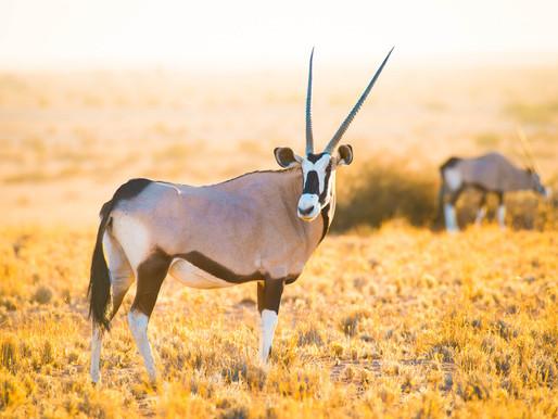 Vom Kruger National Park über Namibia bis nach Kapstadt