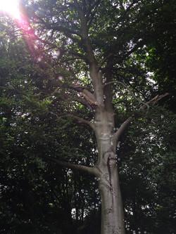 W_Tree_spirit
