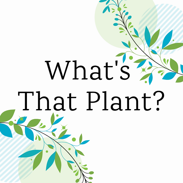 What's That Plant? (July)