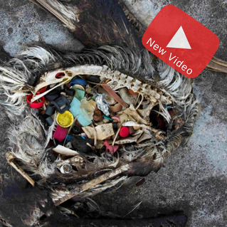 11 Preposterous Facts About Plastic Pollution