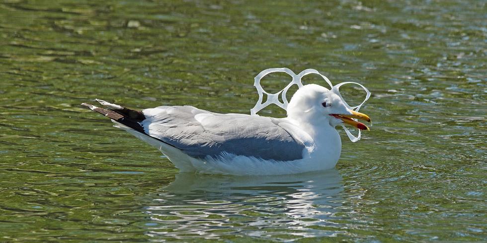 Wildlife and Plastics: The Innocent Victims