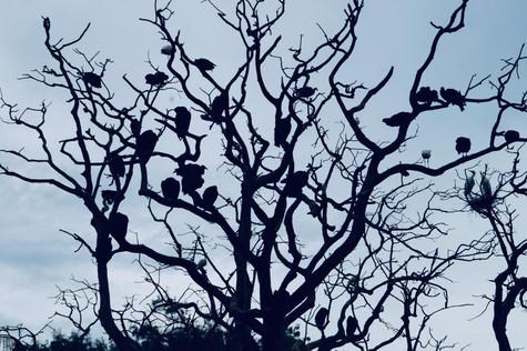 birds. florida