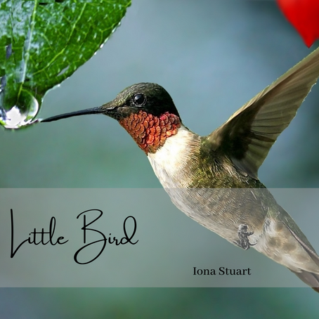 Little Bird - Poetry
