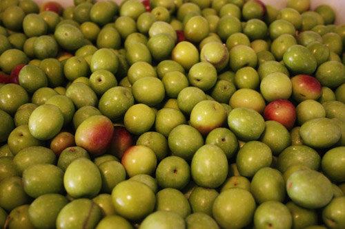 Organic Chetoui (Tunisia)