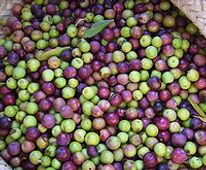 220px-Olives_arbequines006.JPG