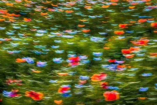 Hommage to Claude Monet