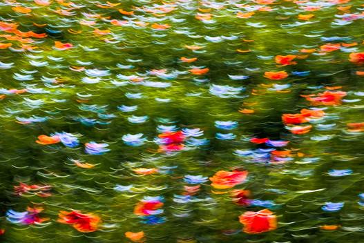 Hommage to Claude Monet, 2016