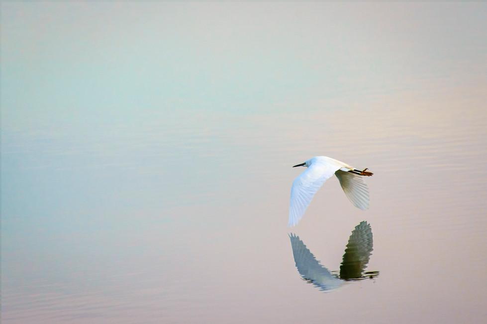 Wing's whisper