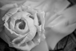 """""""La rosa"""" (detail)"""