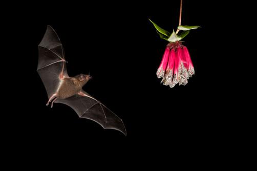 Bats visits the feeders at night