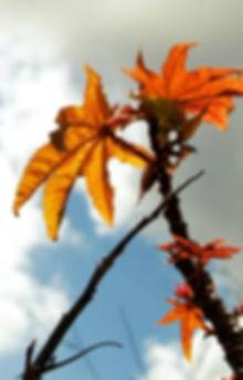טלי הלמן - מור; פסיכותרפיה והנחיית קבוצות בדרך המדיטציה