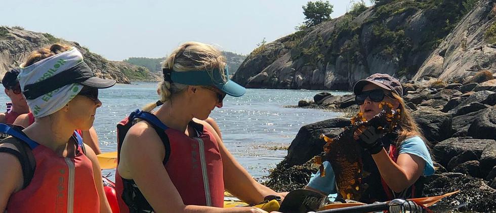 Tångpaddling & tjej retreat