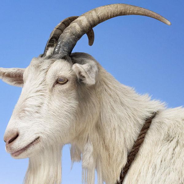 Goat cover.jpg