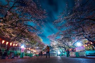JapanD750-81.jpg