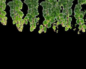 hanging_vines_leaf_png.png
