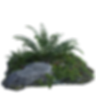 tropical-4061611_960_720.png